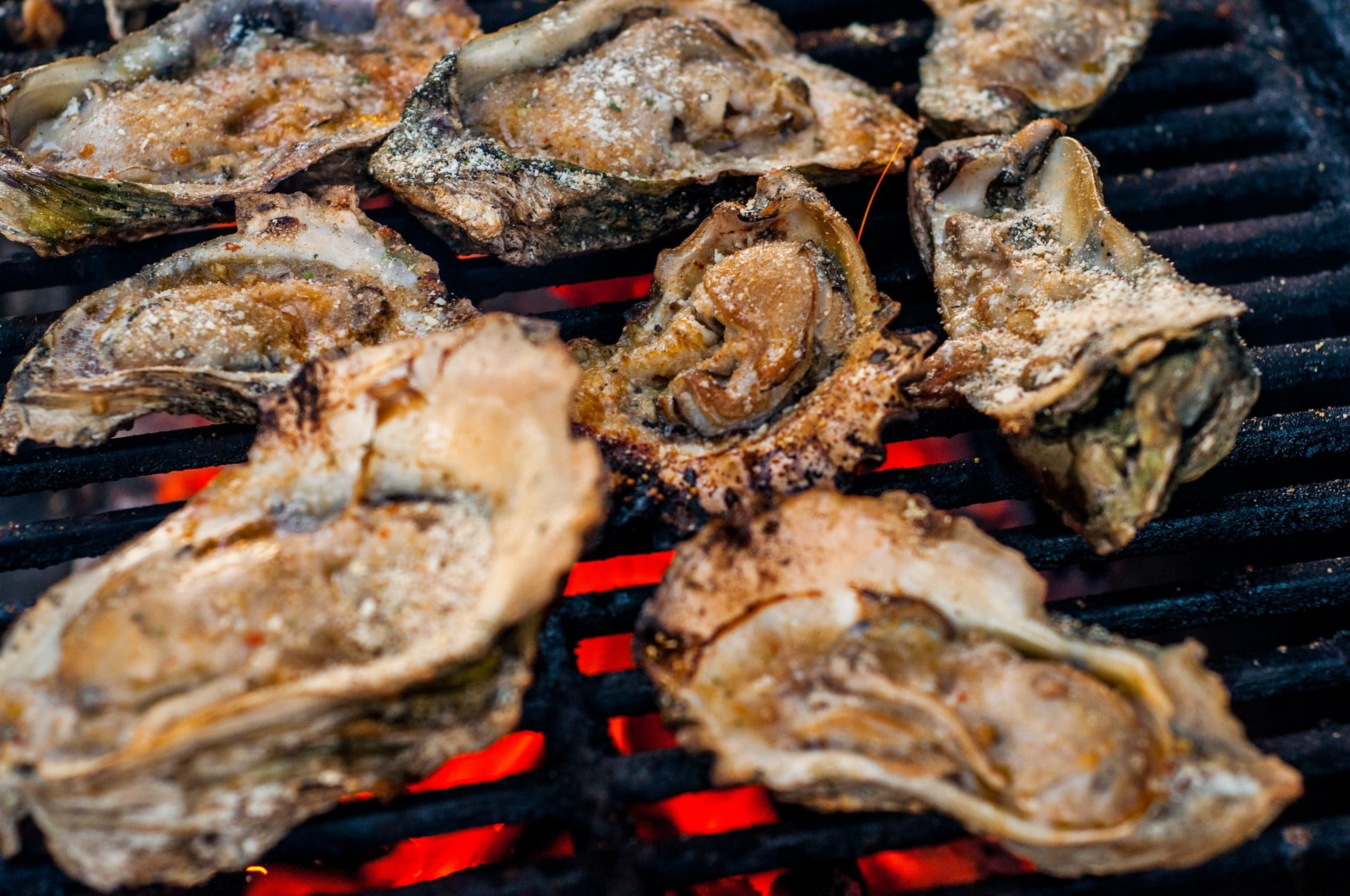 Shucked open Oysters cooking on a hot chargrill